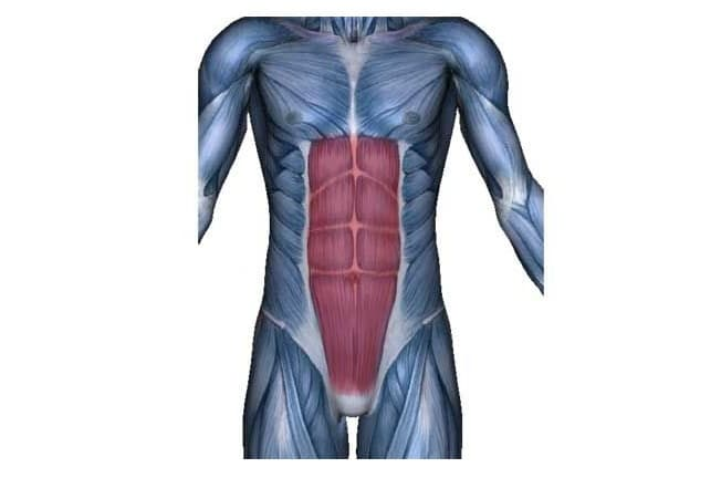musculo oblicuo externo del abdomen vascularizacion