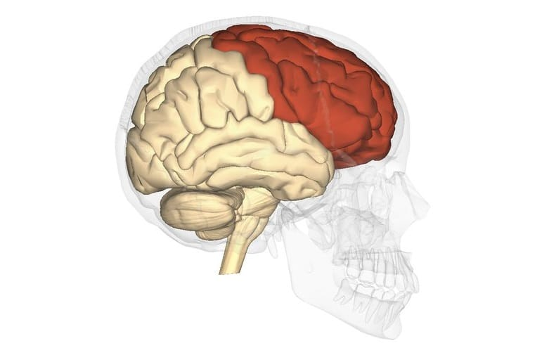 lóbulo frontal
