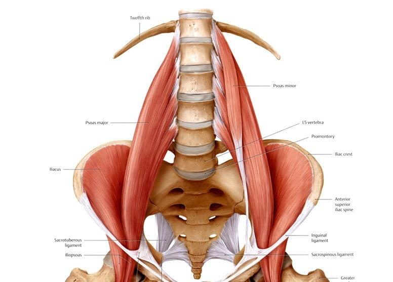 Músculo iliopsoas