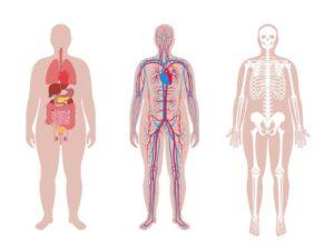 el cuerpo humano y sus partes imagenes