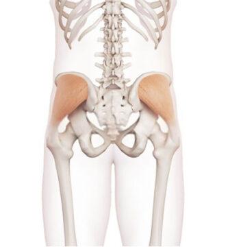 músculo glúteo medio