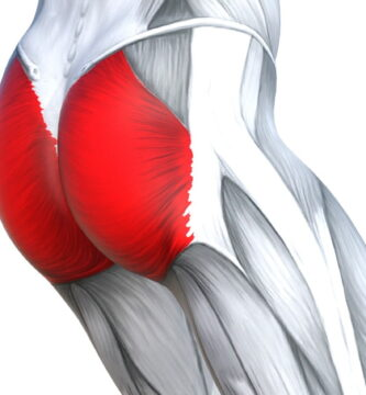 músculo glúteo mayor
