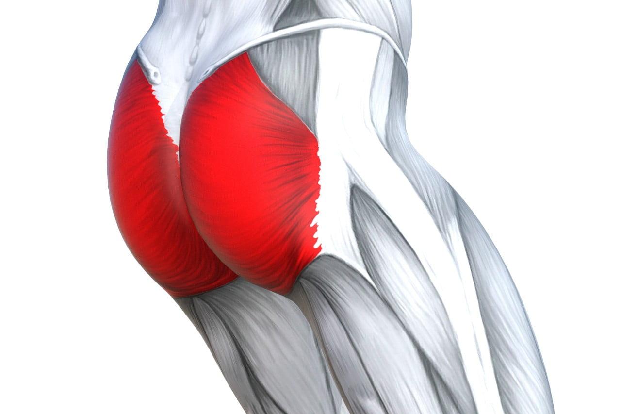 Músculo glúteo mayor | Anatomía Topográfica