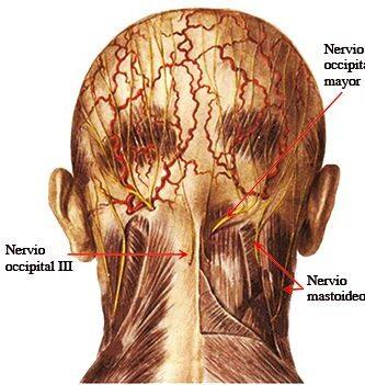 Nervio occipital menor