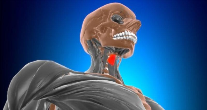 músculo tirohioideo