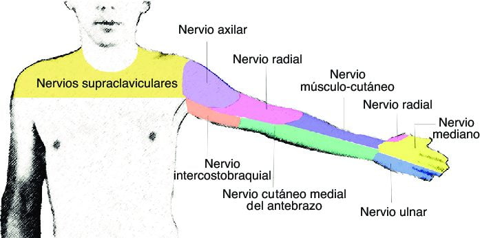 nervio cutáneo medial del antebrazo