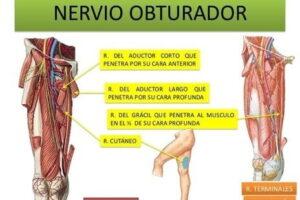 nervio obturador