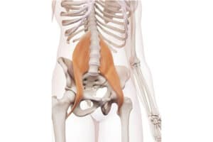 psoas mayor