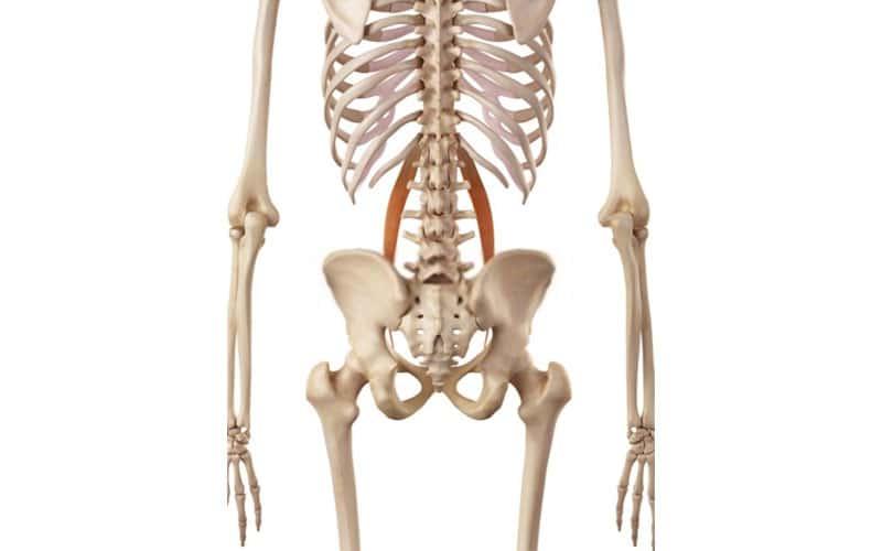 musculo psoas viejo principio e insercion