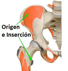músculo ilíaco