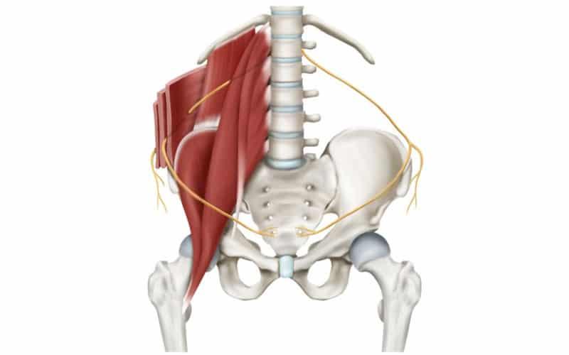 Nervio iliohipogástrico