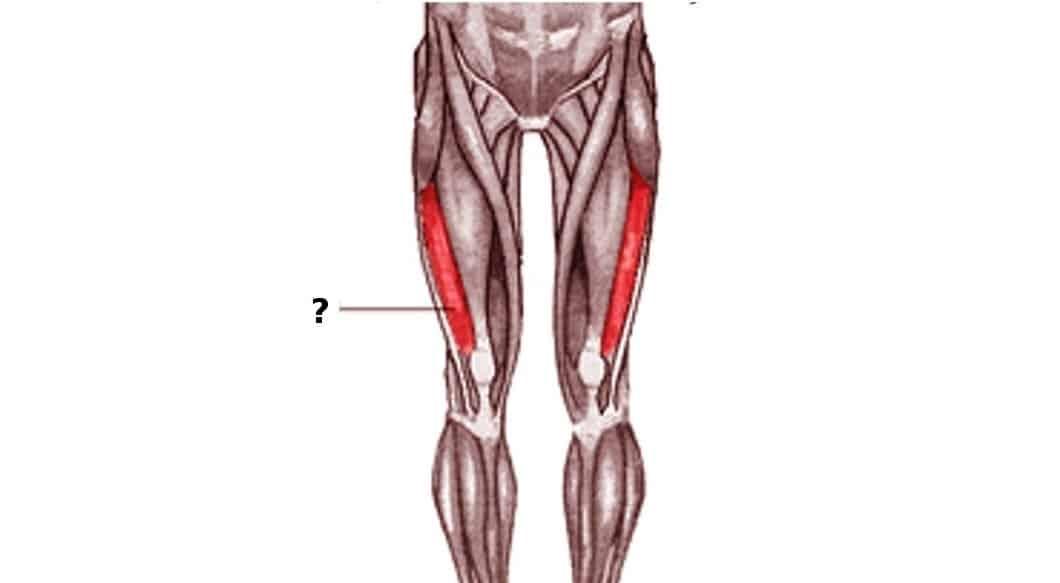 músculo vasto lateral