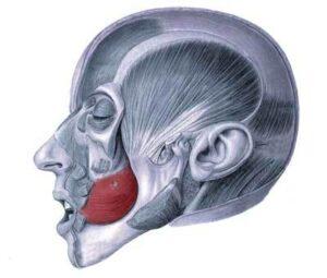 músculo buccinador