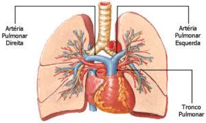 arteria pulmonar