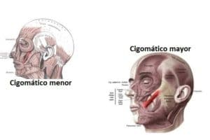 Músculo cigomático