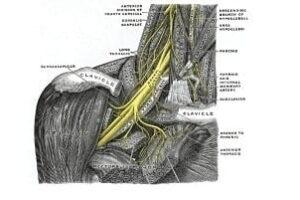 Nervio torácico largo