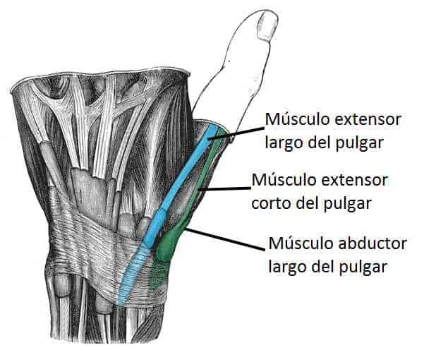 Tabaquera anatómica