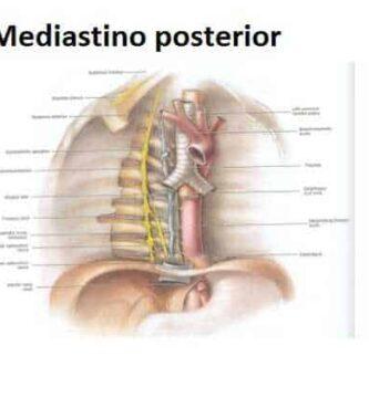 mediastino posterior