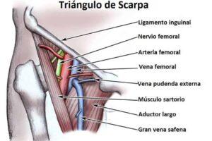 Triángulo de Scarpa