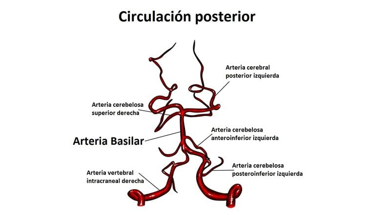 Arteria basilar