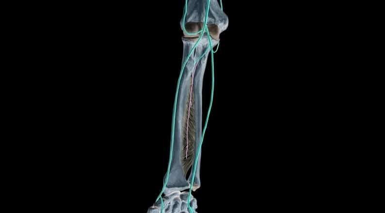 Arteria interósea anterior