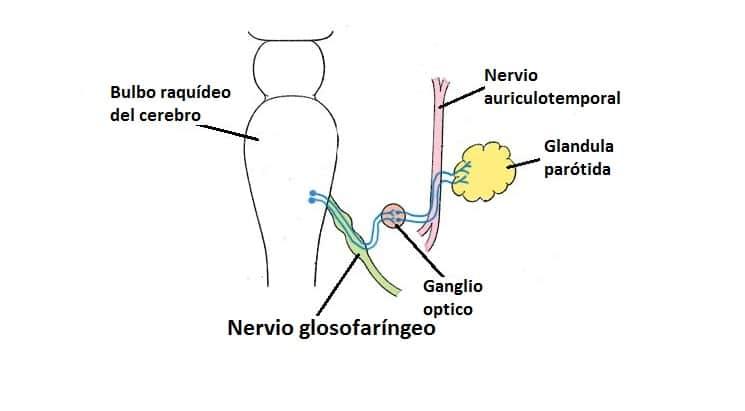 Nervio glosofaríngeo