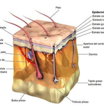 Histología de la piel