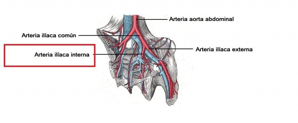 Arteria ilíaca interna