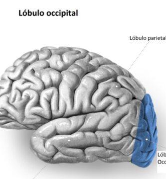 Lóbulo occipital