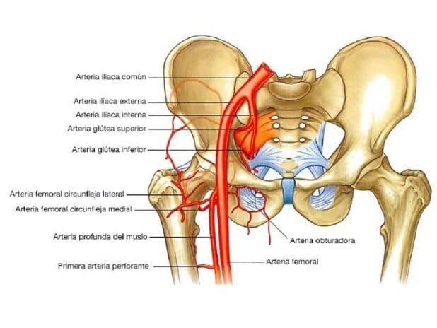 Arteria obturatriz