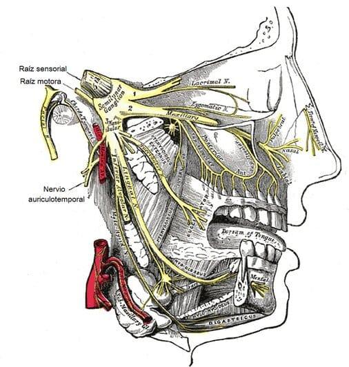 nervio dentario inferior