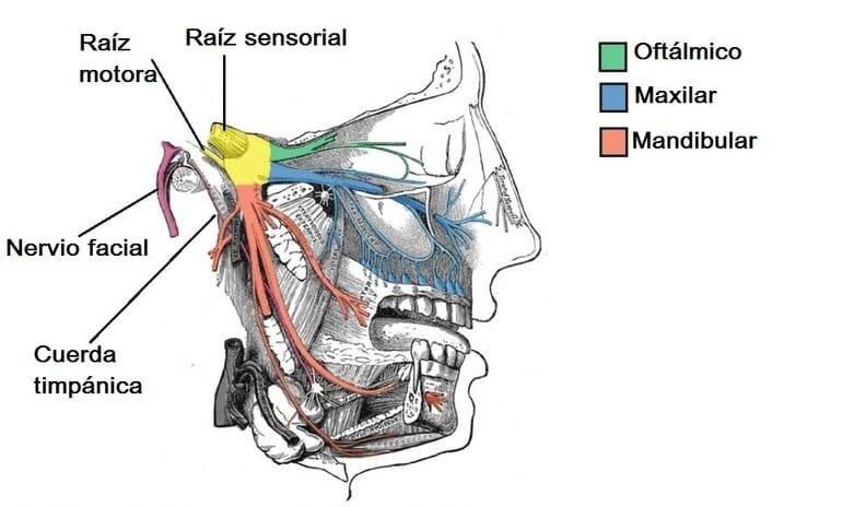 Nervio mandibular
