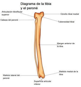 Articulaciones tibioperoneas