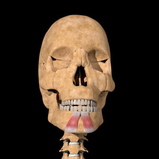 depresor del labio inferior